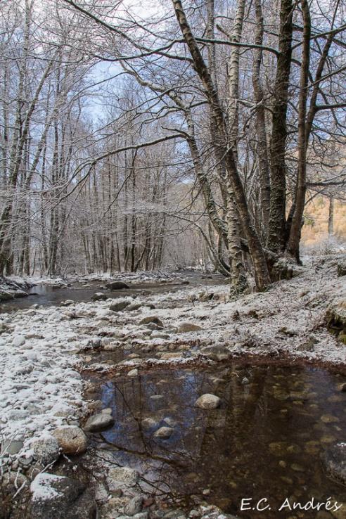 Bosque de Viliella