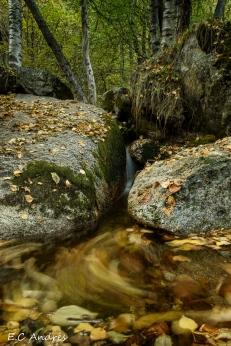 El bosque de Alicia - Lles