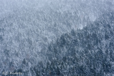 Anoche nevó