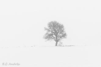 El arbol solitario de All